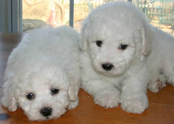 puppies web 3
